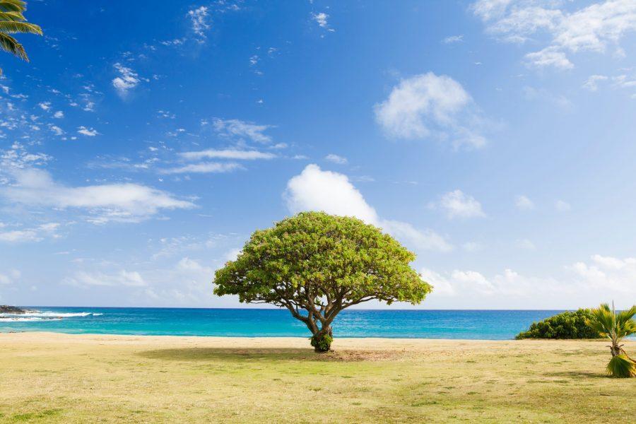 thriving tree
